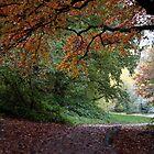 Hampstead Heath in Autumn by copacic