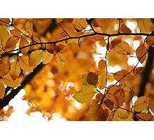 Bokeh Autumn Leaves Photographic Print