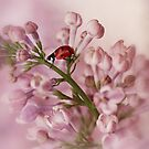 iPad with ladybird by Ellen van Deelen