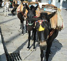 Greece: Hydra donkeys taxi by SlavicaB