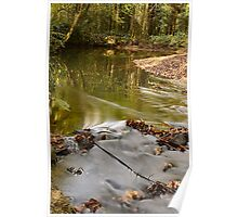 Woodland Water Poster