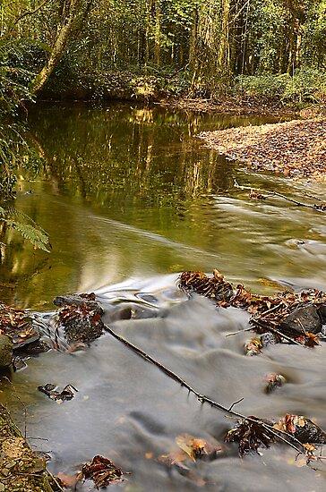 Woodland Water by Martina Fagan