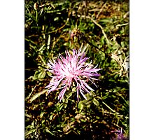 wild flowers of Greek nature Photographic Print