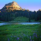 Garden Peak by Marcus Angeline
