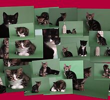 Kitten collage! by Christopher Ware