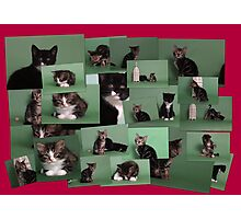Kitten collage! Photographic Print