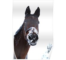 Snowy nose Poster