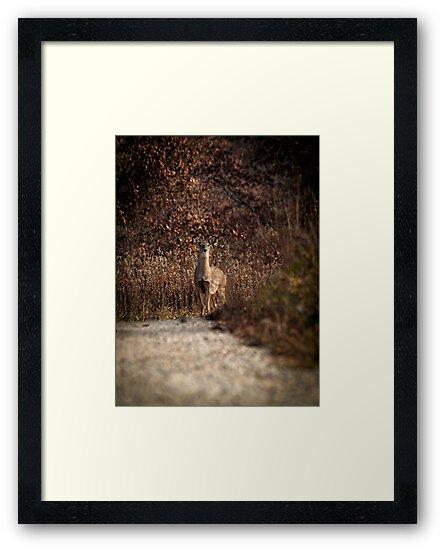 Autumn Whitetail Doe by Thomas Young