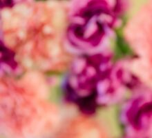 Colourful Carnations by ginofranco