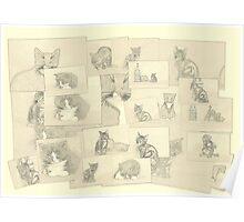 Kitten sketch collage Poster