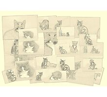 Kitten sketch collage Photographic Print