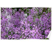 Fragrant Sea Of Purple Poster