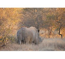 White Rhino  Photographic Print