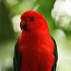 King Parrot by Sea-Change