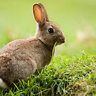 Rabbit by DamianK
