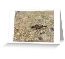 Slender Ground Hopper Greeting Card