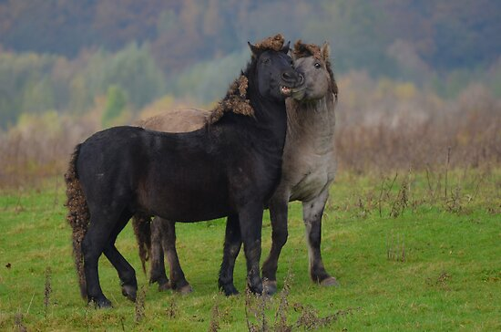 Wild horses in love by Nicole W.
