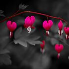 Bleeding Hearts by DJ-Stotty