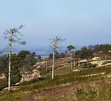 Ashdown Forest by Sue Robinson
