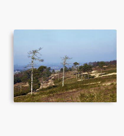 Ashdown Forest Canvas Print