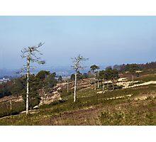 Ashdown Forest Photographic Print