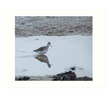Spotted Redshank Art Print