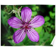 Purple Flower in Montana Poster