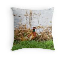 Common Pheasant by water Throw Pillow