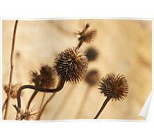 Winter's Dry Flower Poster