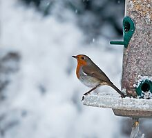 Robin and Snow by Sue Robinson