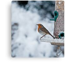 Robin and Snow Canvas Print