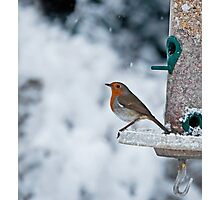 Robin and Snow Photographic Print
