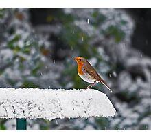 Robin on Snowy Feeder Photographic Print