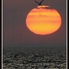 The Sun Over Lake Ontario by Mikell Herrick