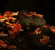 Remnants Of Fall by jules572