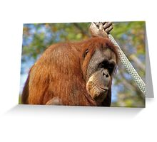 Orangutan Greeting Card