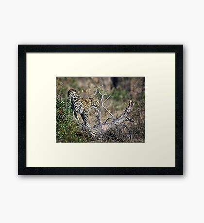 Early Morning Branch Climbing Framed Print