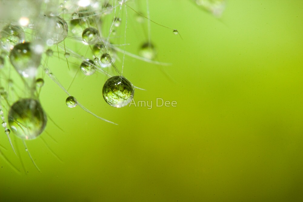 Dandelion Lashes by Amy Dee