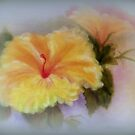 Yellow Hibiscus by kkphoto1