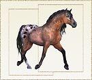 Horse 5 .. calendar by LoneAngel