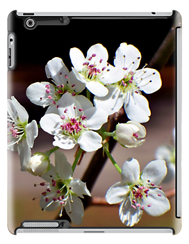 Pear Tree Blossoms iPad Case by Betty Northcutt