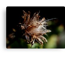 Thistle's Dew Canvas Print