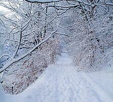 Winter wonderland iPhone case by Jnhamilt