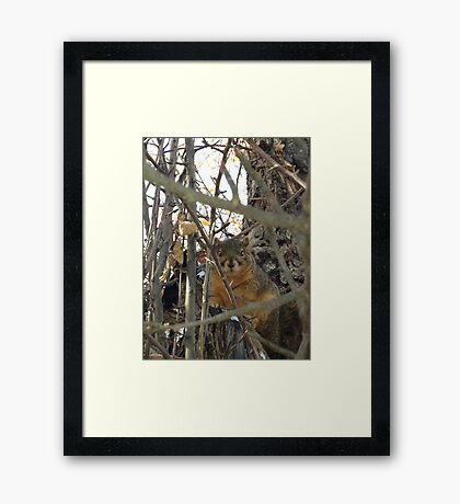 A Squirrel After A Snowstorm  Framed Print