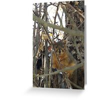 A Squirrel After A Snowstorm  Greeting Card