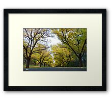 Worms' Eye View of Autumn Framed Print