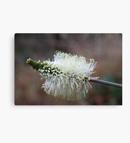 Wildflower of a Bush Grass Canvas Print