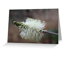 Wildflower of a Bush Grass Greeting Card
