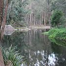 Reflections In Our Local Water Hole by aussiebushstick