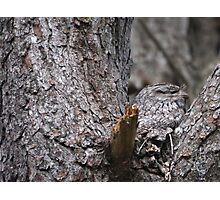 Tawny Frogmouth Nesting Photographic Print